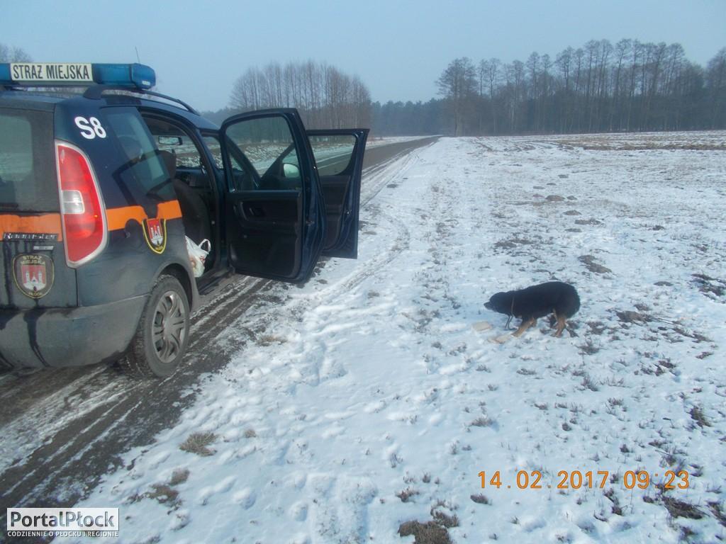 Municypalni znaleźli dwa psy - Zdjęcie główne