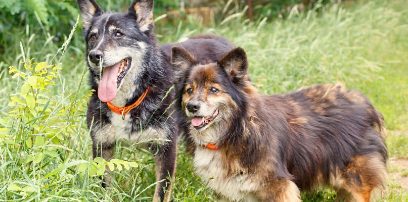 Szukają zwierzakom nowych domów. Kilkanaście czeka na adopcję  - Zdjęcie główne