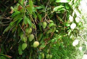 Zdrowie i szczupła sylwetka prosto z afrykańskiego drzewa - Zdjęcie główne