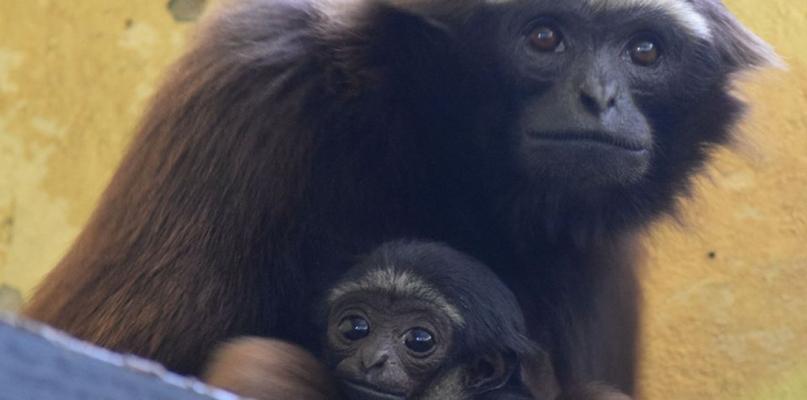 Nowe zwierzęta w płockim zoo [FOTO] - Zdjęcie główne