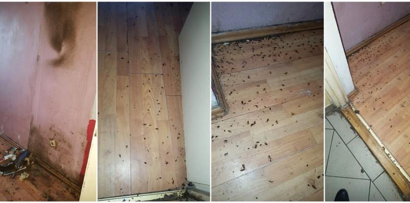 Płocczanka: Plaga robactwa. Sąsiedzi nie śpią, aby po dzieciach nie chodziły karaluchy - Zdjęcie główne