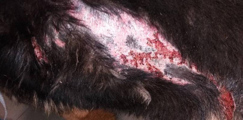 OTOZ Animals: Mężczyzna polewał psy olejem napędowym. Wczoraj zeznawał [DRASTYCZNE ZDJĘCIA] - Zdjęcie główne
