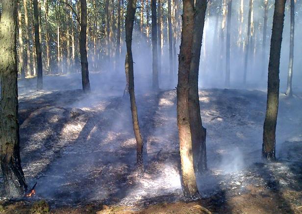Piąty pożar. Mieszkańcy przerażeni [FOTO] - Zdjęcie główne