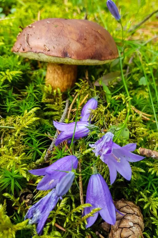 Mnóstwo grzybów w podpłockich lasach - Zdjęcie główne