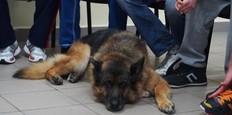 Psy za kratami płockiego więzienia. Więźniowie mieli zadanie - Zdjęcie główne