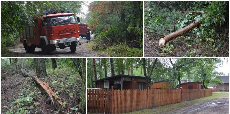 Drzewo runęło na namiot w regionie. W środku byli harcerze [FOTO] - Zdjęcie główne