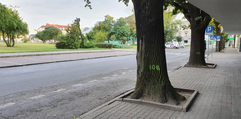 Tajemnicze numery na drzewach na Nowym Rynku. Czy zostaną wycięte? - Zdjęcie główne