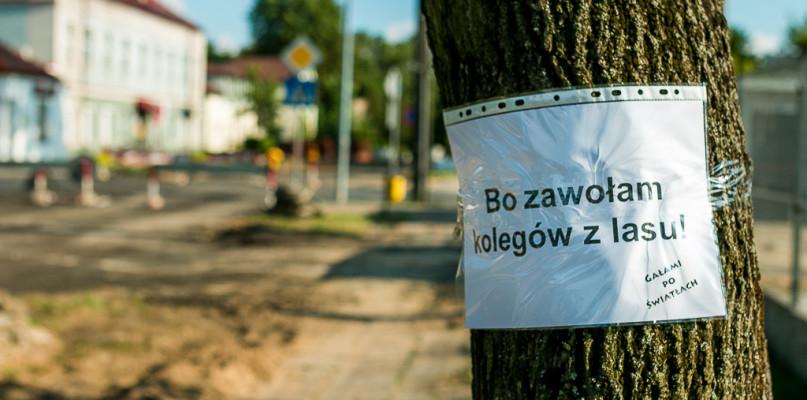 Kilkadziesiąt drzew uratowanych, a to być może nie koniec akcji ratunkowej - Zdjęcie główne