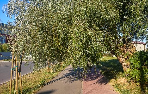 Ratusz wybrał nowego ogrodnika miasta - Zdjęcie główne