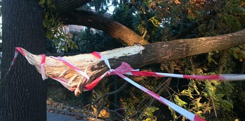 Wichura przeszła nad Płockiem. Zwalone drzewa, zerwany dach - Zdjęcie główne