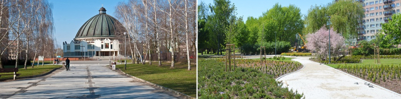 Aleja Roguckiego zachwyca zielenią [ZDJĘCIA] - Zdjęcie główne