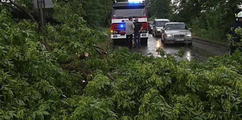 Powalone drzewa pod Płockiem - Zdjęcie główne