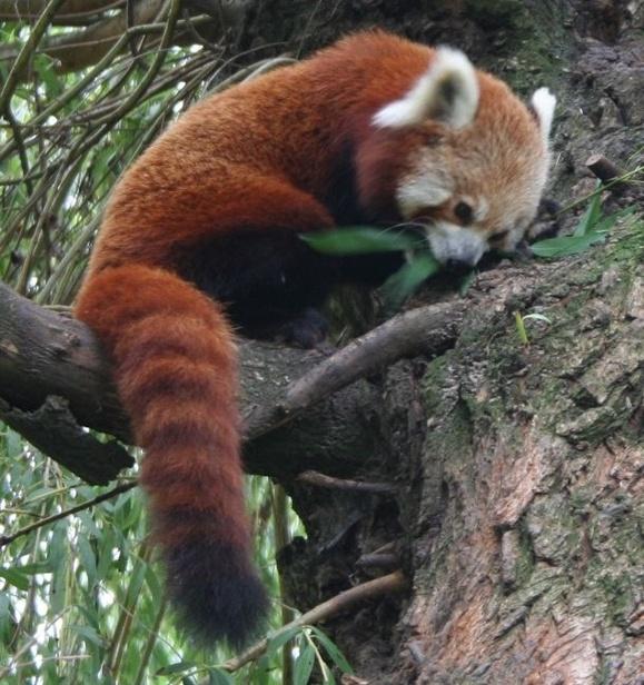Nie Molek i Kung Fu Panda, tylko Mapaj - Zdjęcie główne