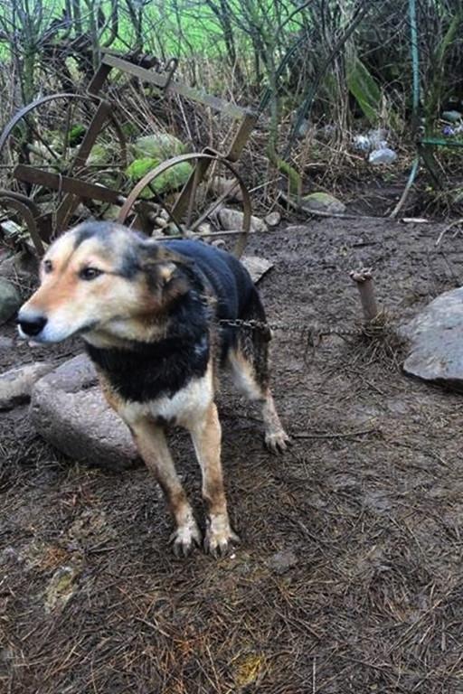 Psia niedola - pół beczki i łańcuch - Zdjęcie główne