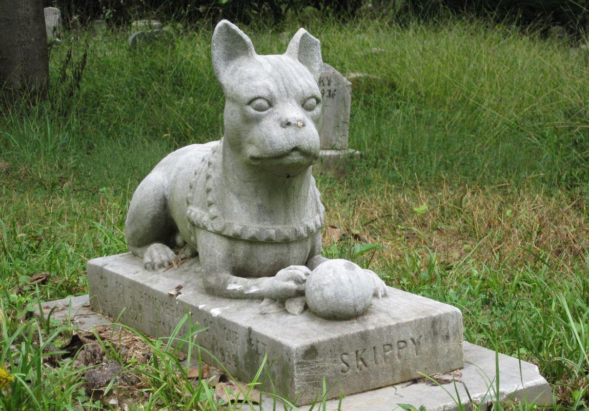Cmentarz dla zwierząt w Płocku? Jest taki pomysł - Zdjęcie główne