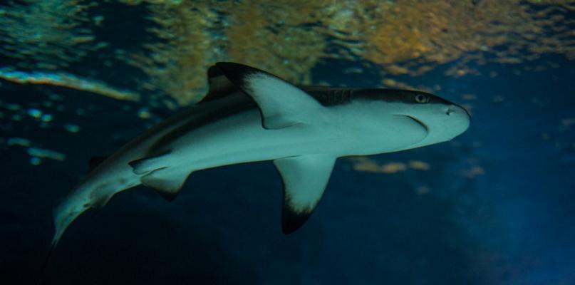 Opowiedzą o żarłaczach, ptasich pięknościach i tajemnicach wód - Zdjęcie główne