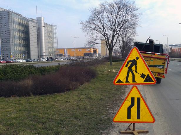 Zasadzą 70 drzew na Podolszycach. Po co? - Zdjęcie główne