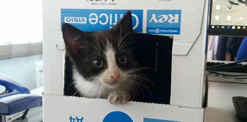 Potrzebna pomoc dla małego kotka. On też pragnie domu - Zdjęcie główne