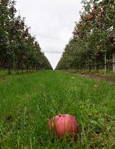 Ci od jabłek. Biznes w zgodzie z naturą [FOTO] - Zdjęcie główne