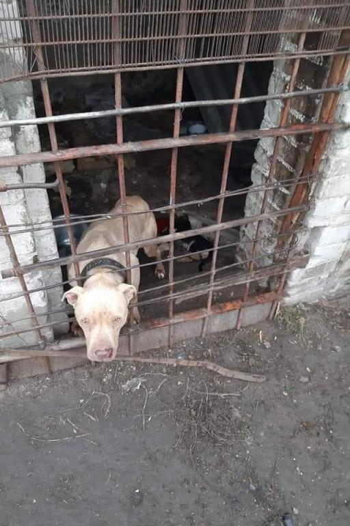 Psi koszmar. Ruszyli na pomoc - Zdjęcie główne