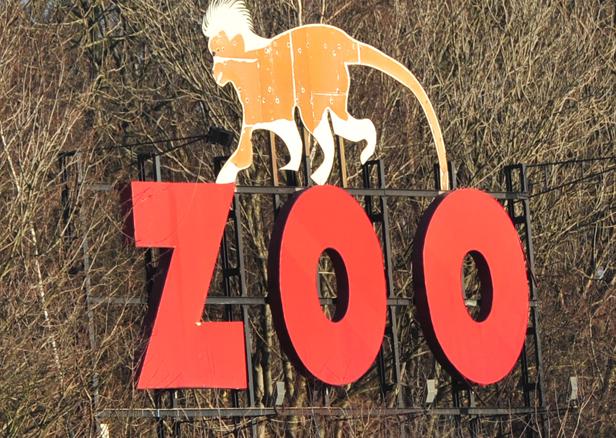 Rozbudowa i rzadkie zwierzęta w zoo - Zdjęcie główne