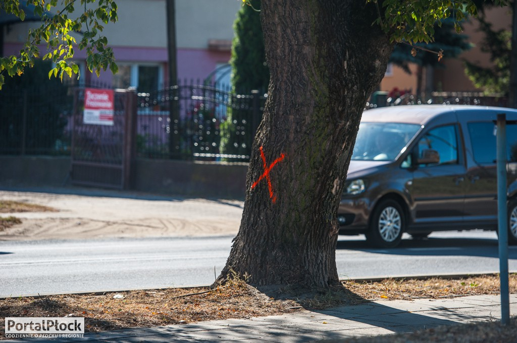 Pomarańczowe krzyżyki na drzewach - Zdjęcie główne