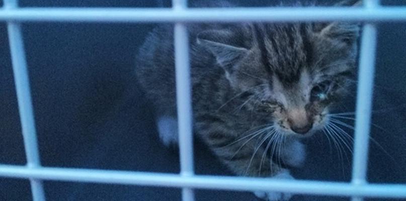 Wstyd! Porzucili przy śmietniku maleńkiego kociaka - Zdjęcie główne