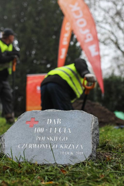 Polski Czerwony Krzyż ma swój dąb - Zdjęcie główne