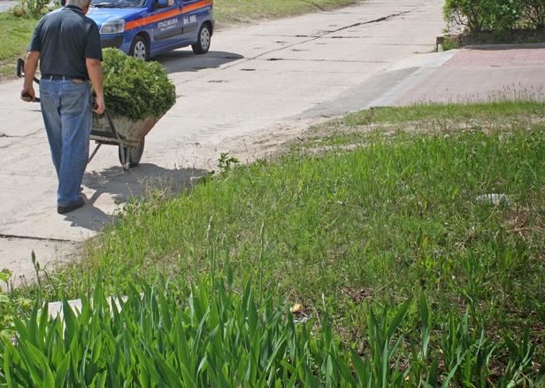 Koszą trawę i wrzucają do sąsiadów! - Zdjęcie główne