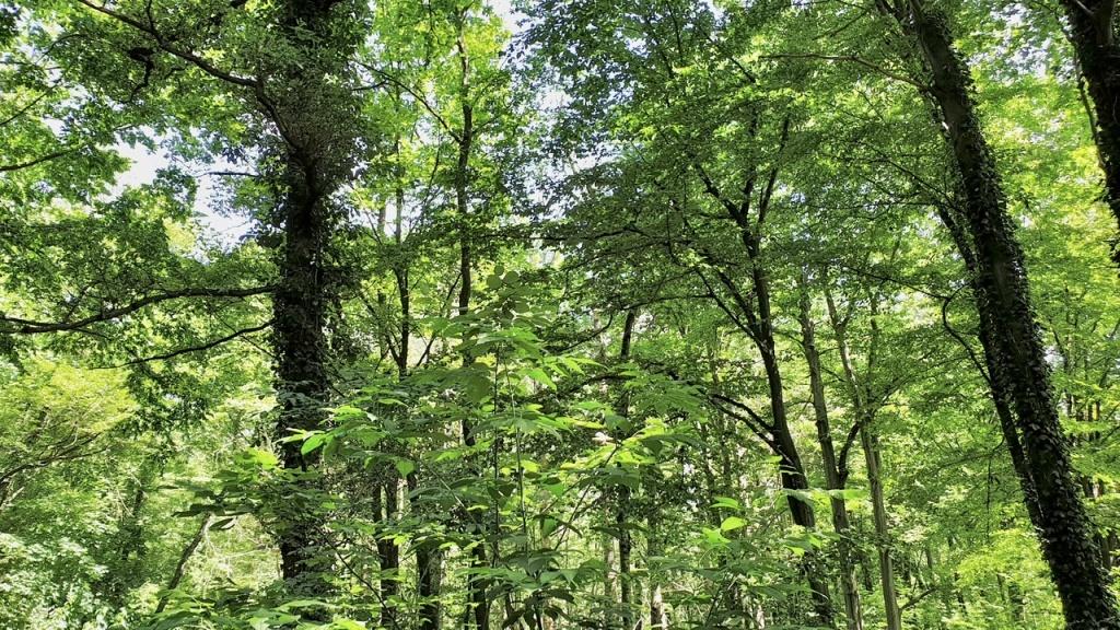 Łódź puszczą stoi. Pierwotny las w samym sercu miasta [WIDEO] - Zdjęcie główne