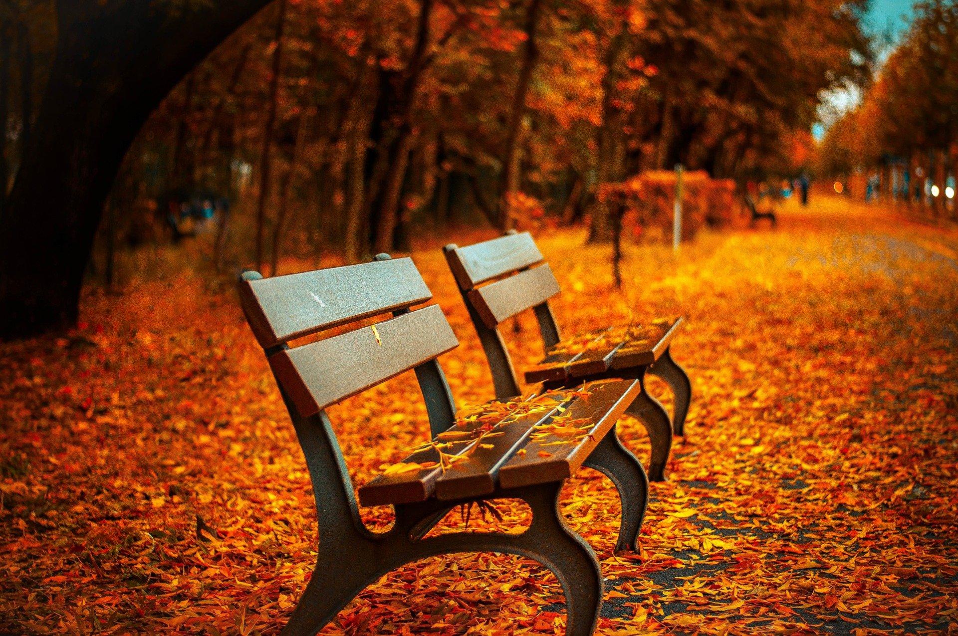 Jesień już nie tylko w kalendarzu. Pogoda na weekend [9-10 października] - Zdjęcie główne