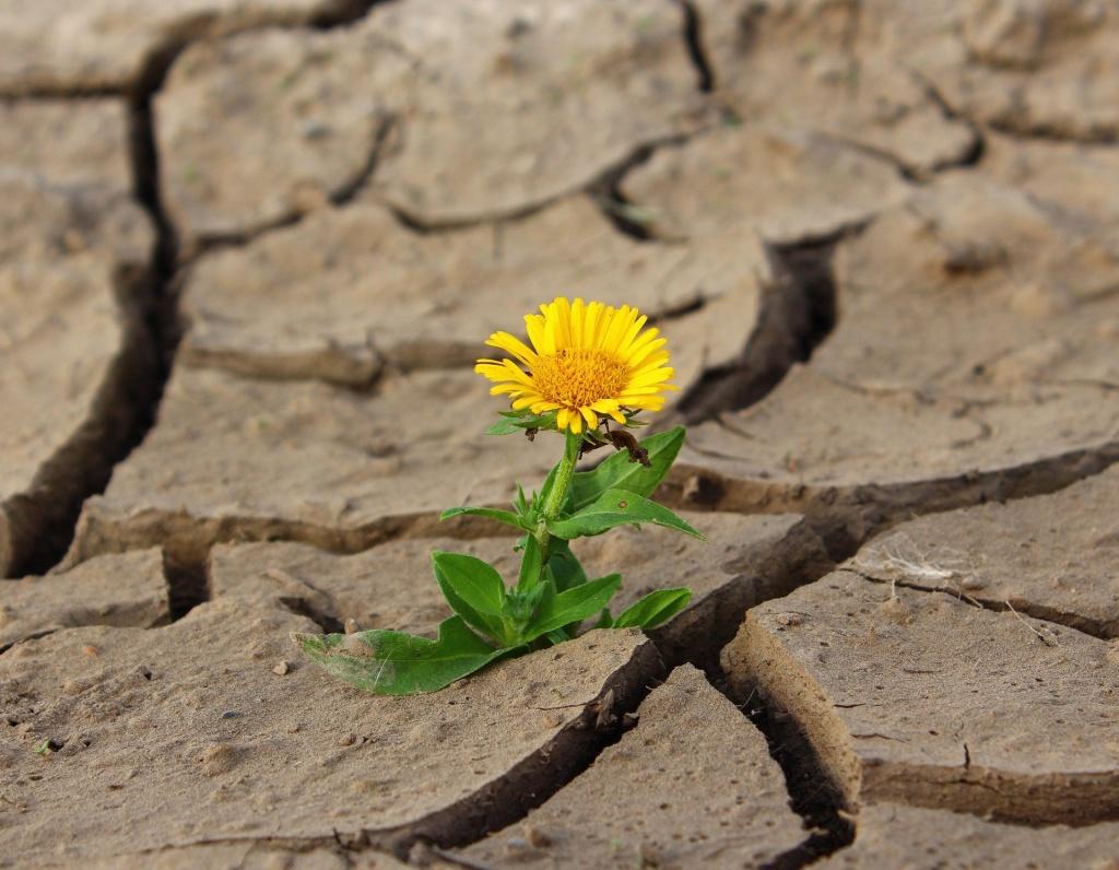 Łódzki ekoportal pomoże walczyć z suszą. Jak dbać o przyrodę? [PORADNIK] - Zdjęcie główne