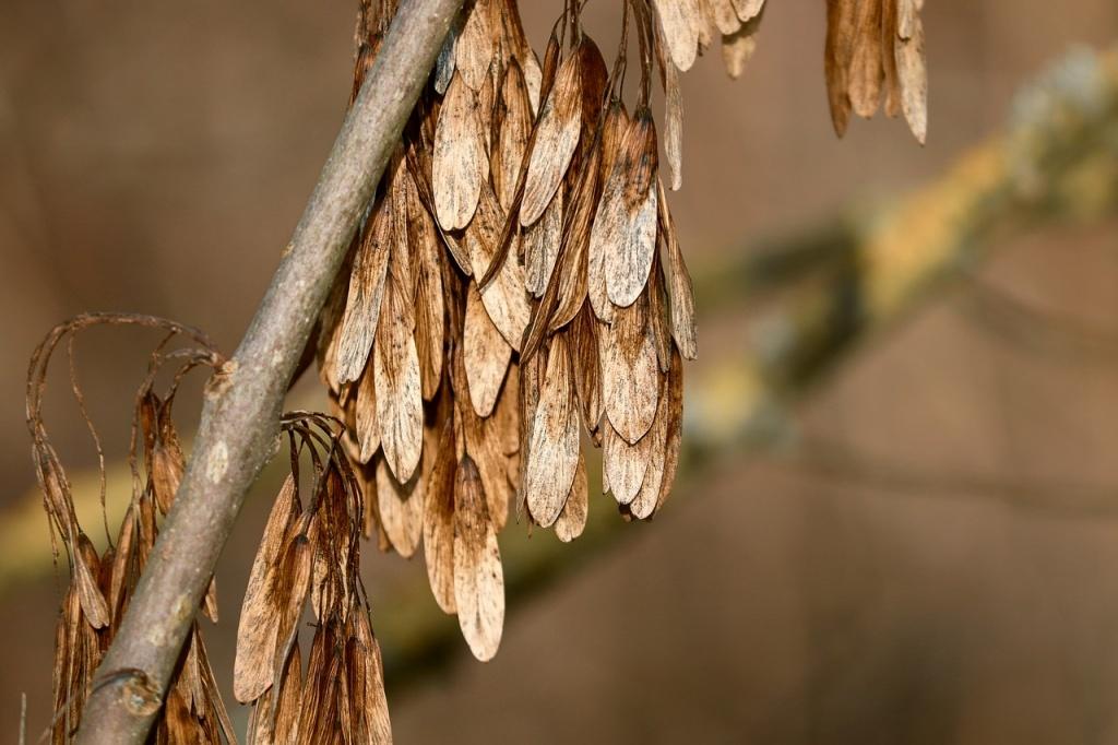 Kłopotliwe jesiony na Stokach. Czy wycinać zdrowe drzewa?  - Zdjęcie główne