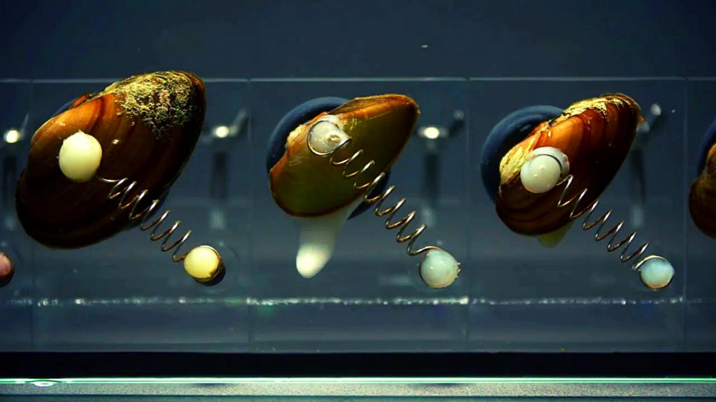 Małże i okonie pilnują jakości łódzkiej wody. Czerpana ze studni głębinowych ma nawet kilkanaście tysięcy lat [WIDEO] - Zdjęcie główne