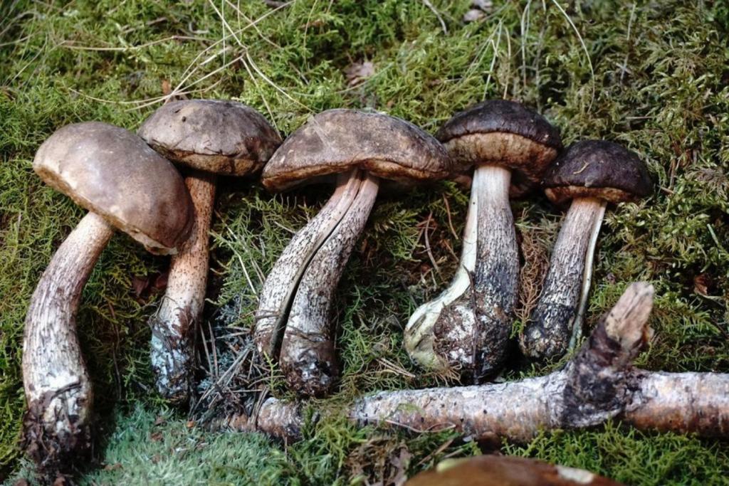 W lasach województwa łódzkiego pojawiły się grzyby. Sezon grzybobrań można uznać za otwarty - Zdjęcie główne