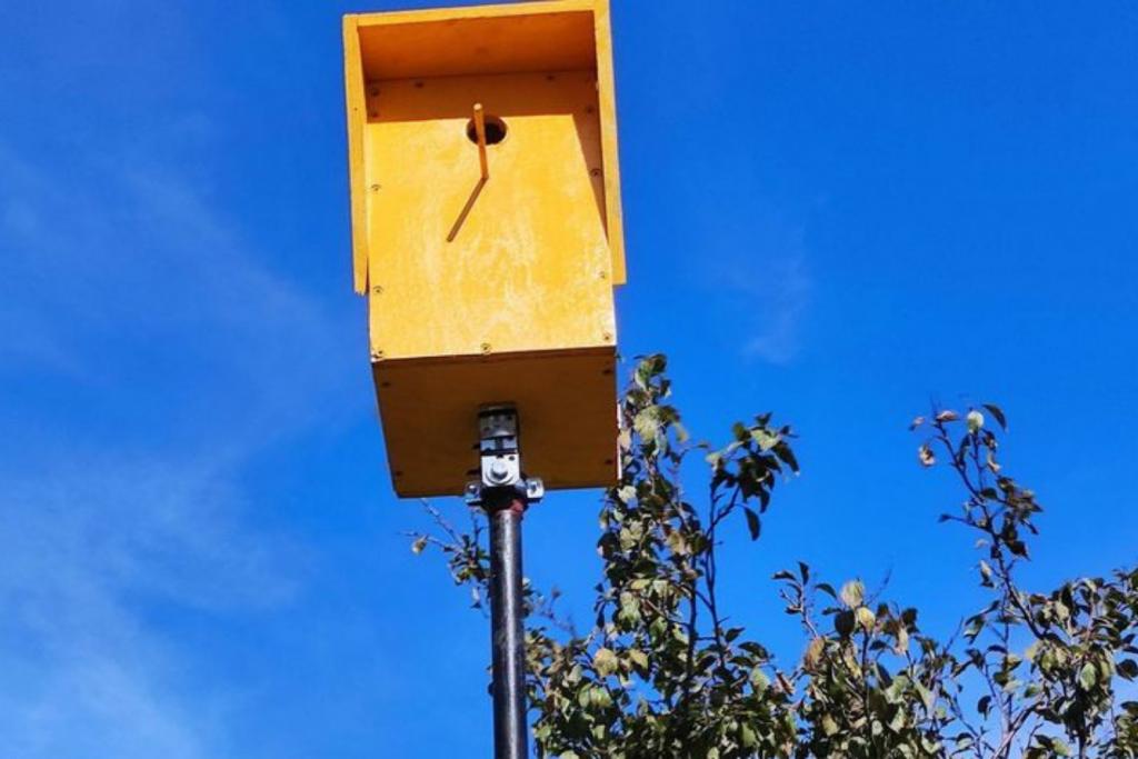Budka dla ptaków czy fotoradar? Mieszkańcy Pszczonowa w miły sposób przechytrzyli kierowców  - Zdjęcie główne