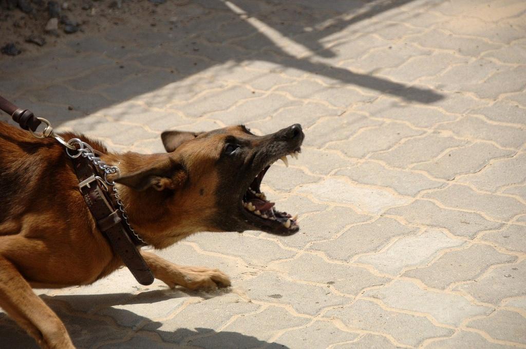 Atak na biegacza w Łagiewnikach. Zatrzymano właścicieli agresywnych psów! - Zdjęcie główne