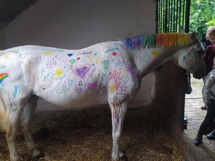 """Pomalowany koń pod Zgierzem. """"Zwierzę zostało potraktowane jako kawałek ściany, przedmiot"""" - Zdjęcie główne"""