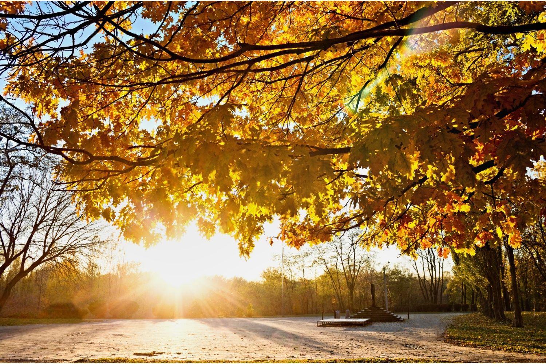 Pogoda Łódź. Taka jesień da się lubić [prognoza pogody weekend 25-26.09] - Zdjęcie główne
